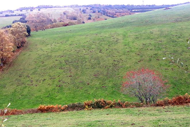 Daños en una pradera en la que se aprecian los agujeros y la tierra acumulada por los roedores.