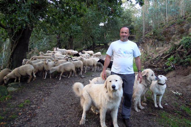 Antonio, cos seus cans e as súas ovellas