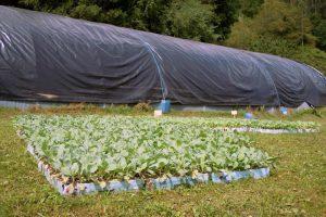Fan plantación escalonada e un viveiro de Cantabria sérvelles planta todas as semanas