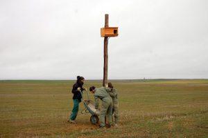 Colocación de postes con niños para aves rapaces en fincas da comarca de Tierra de Campos. Foto: GREFA