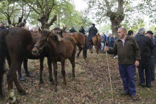 Chega o San Martiño de Teo, unha das feiras cabalares máis antigas de Galicia