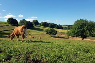 Axudas da Xunta para fomentar a contratación de seguros agrarios e gandeiros