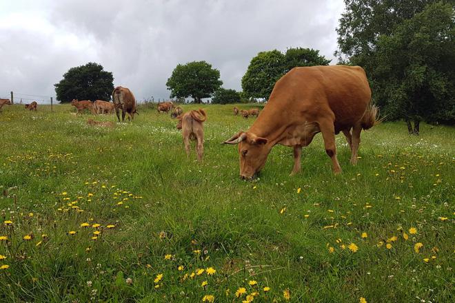 Piden no Parlamento maiores axudas para a gandería de carne