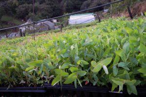 As plantas medran ao aire libre para que noten menos o cambio ao trasplantalas