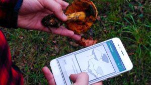 A APP pretende non ser un identificador só de especies comestibles, senón unha ferramenta formativa.