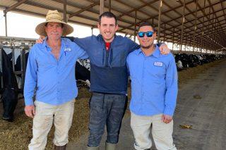 O chip galego que monitorizará vacas en Brasil e Indonesia