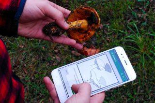 Lanzan una aplicación móvil para identificar setas en el monte