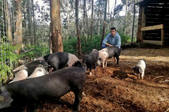 Nando xunto aos seus porcos na finca de 3 hectáreas onde os ten