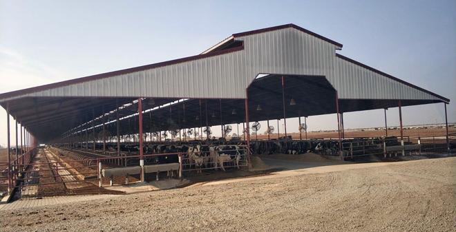 Instalacións de Triple H Dairy na zona de Tulare, en California