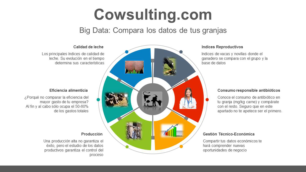 cowsulting2