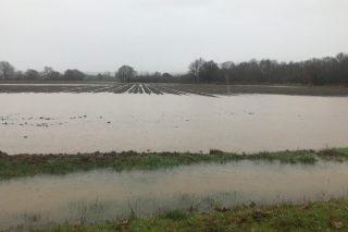 Vídeo: Graves danos no cereal e nos cultivos de horta da Limia polas enchentas