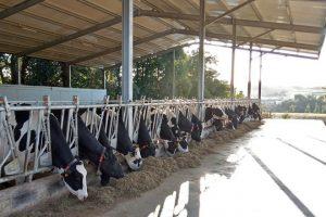Nave para as vacas secas construída no 2018