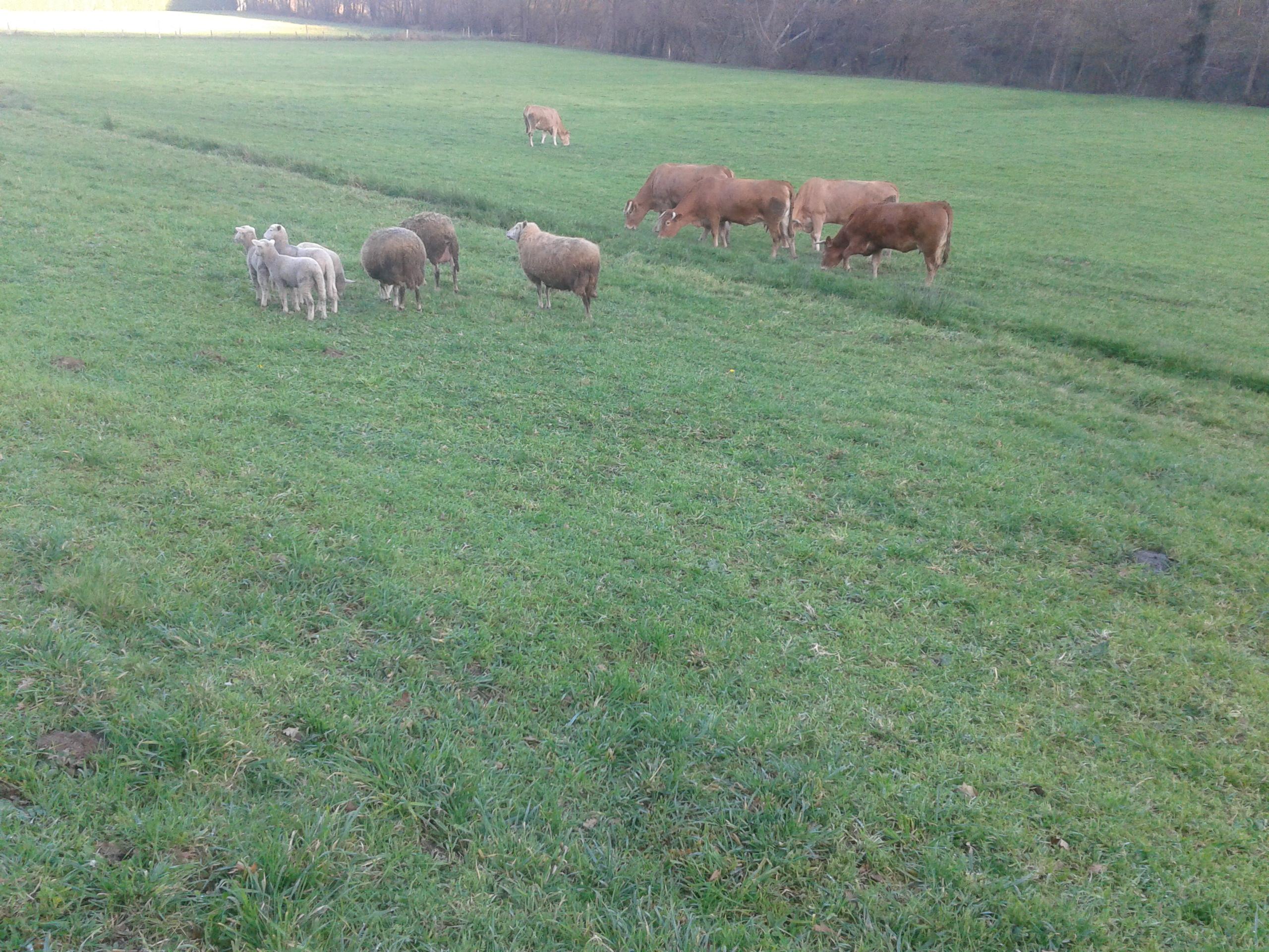 pablo veterinaria ovellas 1