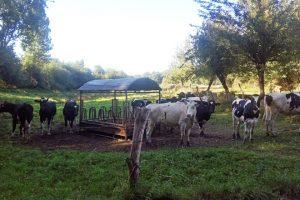 Abaratan custos tendo as xovencas en pastoreo desde que están preñadas