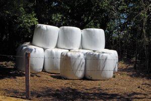 En invierno suplementa con silo y hierba seca