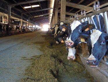 Calculan que a escalada dos pensos supón un sobrecusto mensual nas granxas galegas de 2,7 millóns de euros