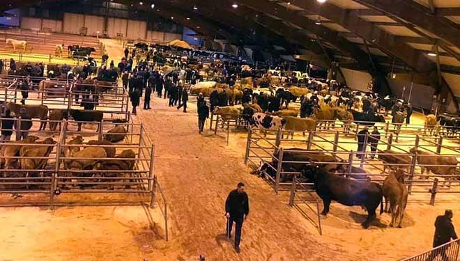 Mercado semanal dos mercores en Amio, en Santiago de Compostela