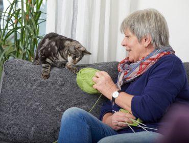 Bayer pon en marcha un programa formativo en benestar animal dirixido ás persoas que conviven cun animal de compañía