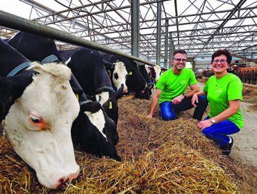 Heide Hoeve, xeados holandeses a partir da produción de 56 vacas ProCROSS