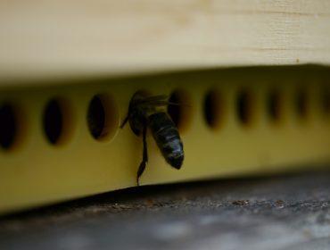 Bayer lanza as tiras PolyVar para o tratamento da varroa