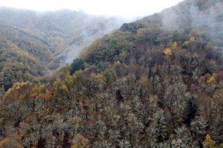 La Devesa da Rogueira, en el Courel, primer bosque en España en certificar la conservación de la biodiversidad