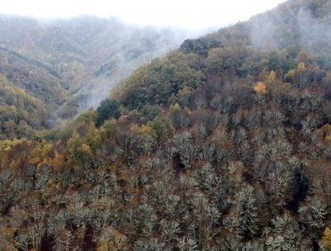 A Devesa da Rogueira, no Courel, primeiro bosque en España en certificar a conservación da biodiversidade