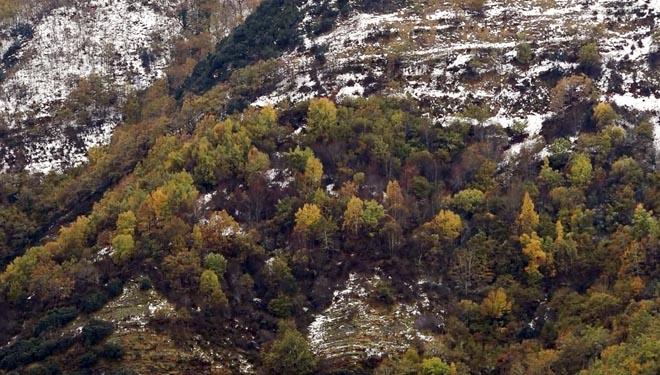 Límite altitutidinal ó que chegan as árbores da Devesa. // Imaxes e vídeo: Asefor.