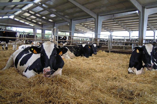 Requerimentos das instalacións para vacún de leite en ecolóxico