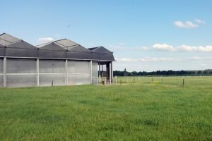 Dispoñen de 30 hectáreas de terreo arredor da explotación