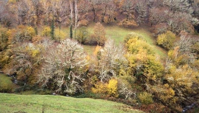 Prados de montaña no entorno do bosque.