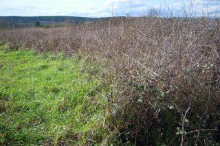 Novas vidas para a herba sobrante e arbustos de terras de baldío
