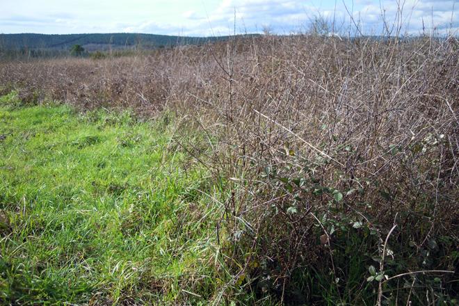 Terra abandonada na zona do Regadío do Val de Lemos, en Monforte