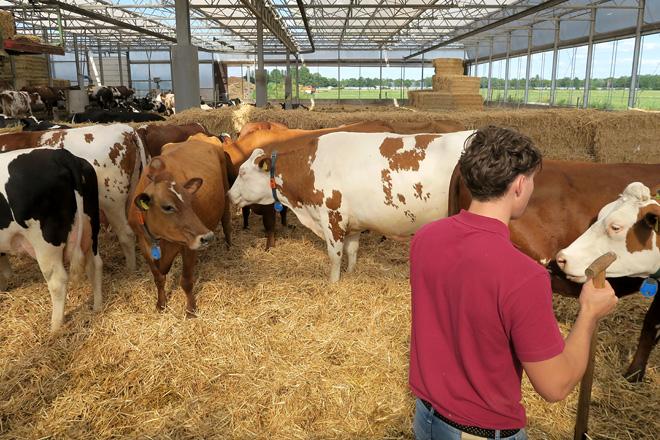 vacas producion2