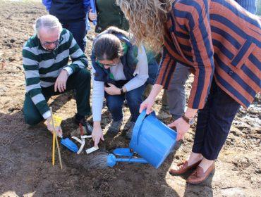 O CSIC e a adega Mar de Frades recuperan tres variedades galegas brancas