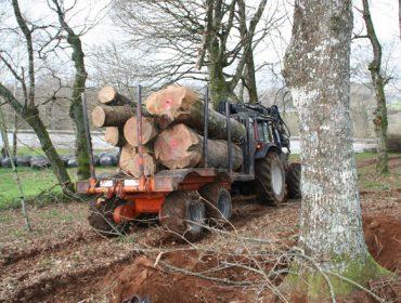 Autorizados os desprazamentos dos propietarios forestais para vender madeira