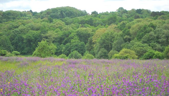 Un estudo conclúe que as granxas ecolóxicas teñen maior diversidade de paxaros, plantas e bolboretas