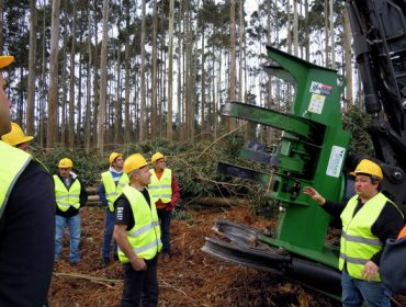 Forest Pioneer presenta a nova cortadora de cizalla TMF 600, especial para eucalipto e made in Galicia