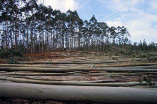 Axilízanse as autorizacións de corta de madeira a carón de ríos, estradas autonómicas e en Rede Natura