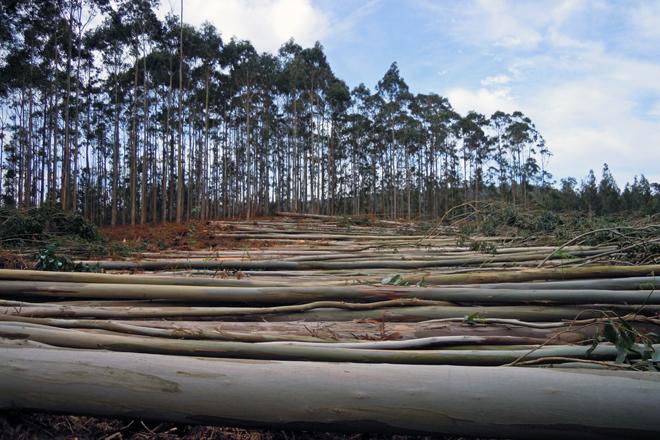 Agilizadas las autorizaciones de tala de madera al lado de ríos, carreteras autonómicas y en Red Natura