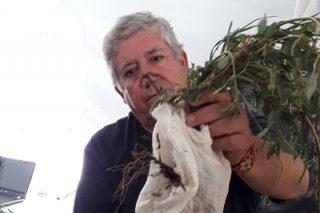 """""""Os abonos orgánicos son moito máis beneficiosos para o solo que os químicos"""""""