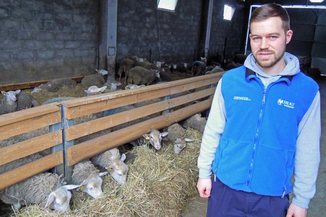 Luis Miguel coas súas ovellas na nave que construíu este ano