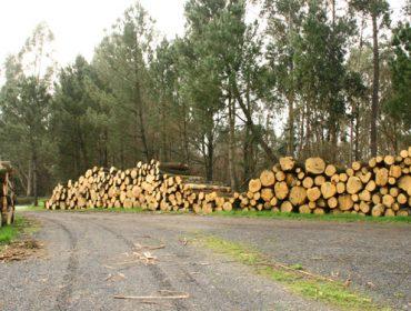 Como está a influír a crise da Covid-19 na industria forestal?