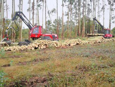 """""""Cortar árbores é malo?, se se pensa iso hai que explicar como a madeira resolve problemas"""""""