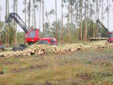 Incorpórase o cálculo de secuestro de carbono das árbores nas solicitudes de corta