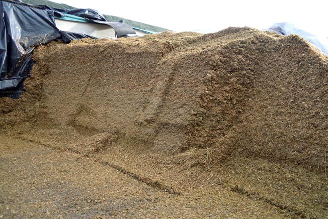 Os danos do xabarín obrigounos a reducir de 30 a 23 quilos a cantidade de silo de millo na ración