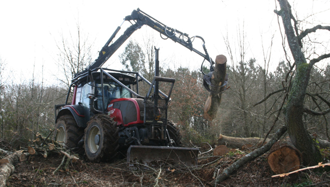 Trabajos-forestales-Maderas-Fernandez-Lalin-