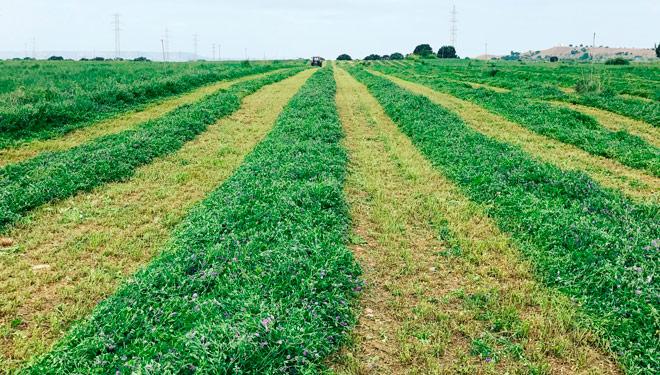 cosecha-alfalfa-Finca-Bizcarra-