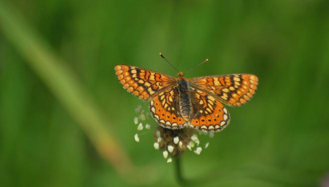 mariposas-biodiversidade-pradeiras-