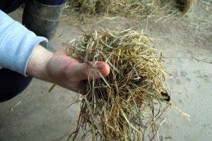 Silo de herba, cunha moi baixa porcentaxe de humidade
