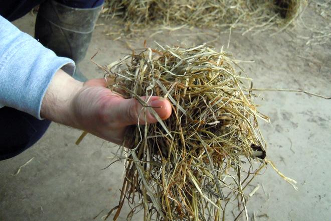 silo herba presecado